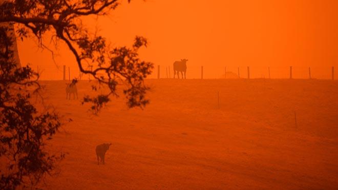 El fum dels incendis forestals d'Austràlia arriba a Xile