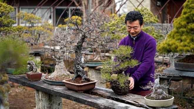 ¿Qui està robant bonsais al Japó?