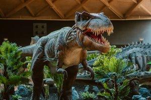El Tyranosaurus Rex es la estrella de esta exposición.
