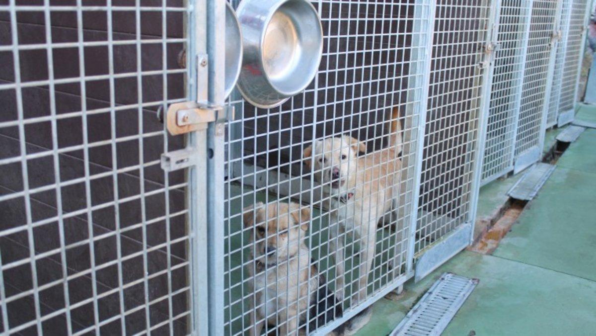 L'Ajuntament de Barcelona imposa una sanció de 150.000 euros per vendre animals per internet