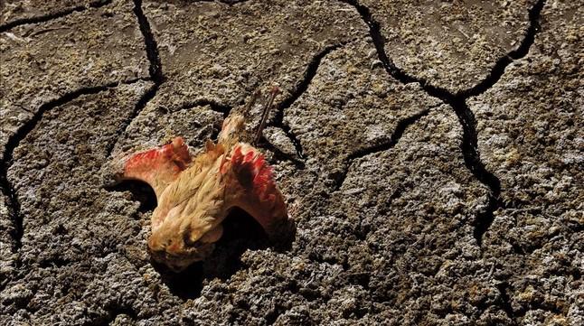 Sequía en África.