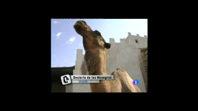 Seres ejemplares: camello y cabra
