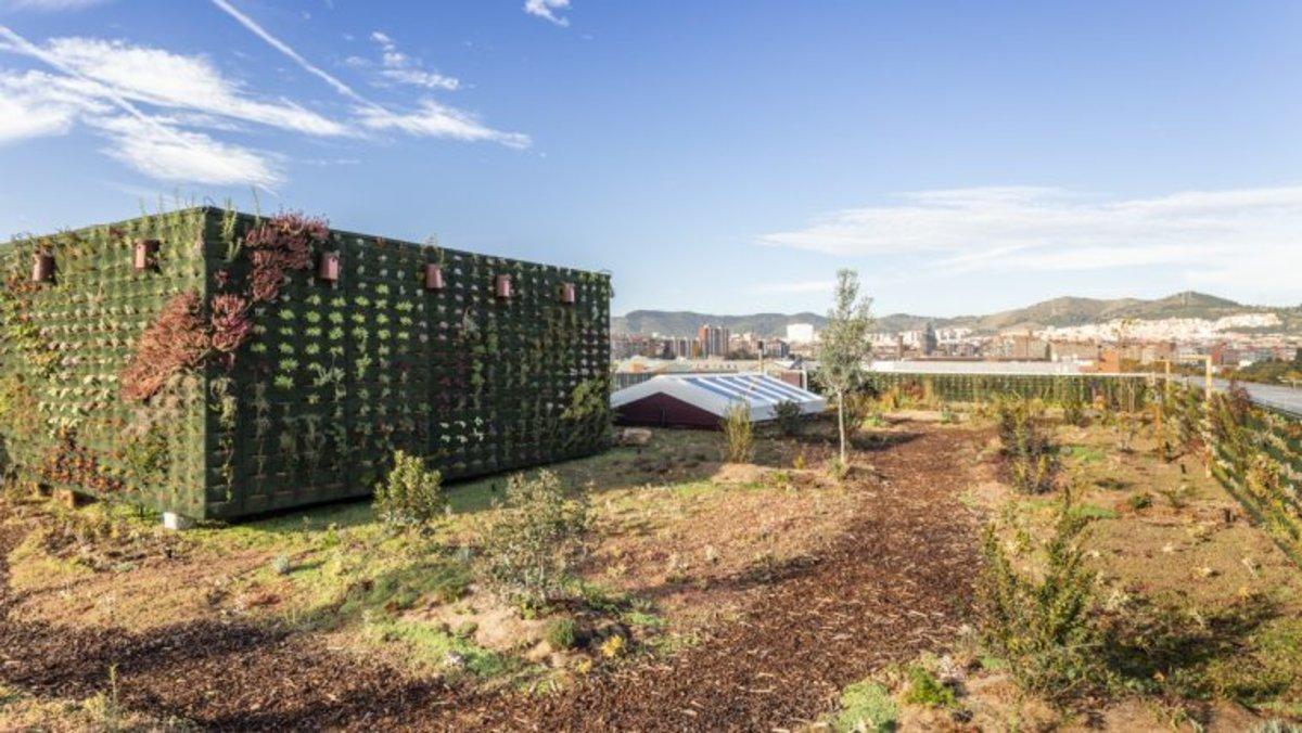 Obert el segon concurs per construir cobertes verdes a deu edificis de vivendes