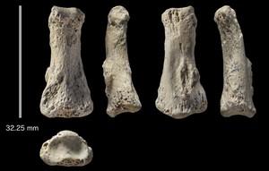 Restos fósiles de las falanges humanas localizadas en Arabia Saudí. Tienen al menos 85.000 años.