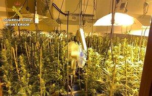 Imagen de la plantación de marihuana intervenida por la Guardia Civil en el municipio madrileño de Manzanares El Real.