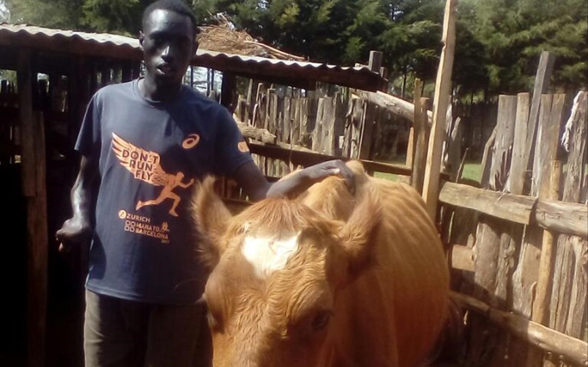 Jonah Chesum, con lavaca Barcelona, en su granja de Kenia.