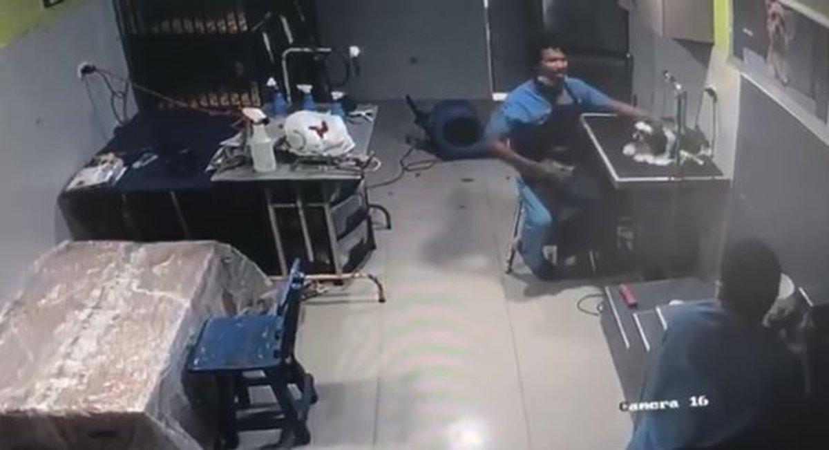 Cruel veterinario deja inconsciente a perrito tras darle brutal golpe