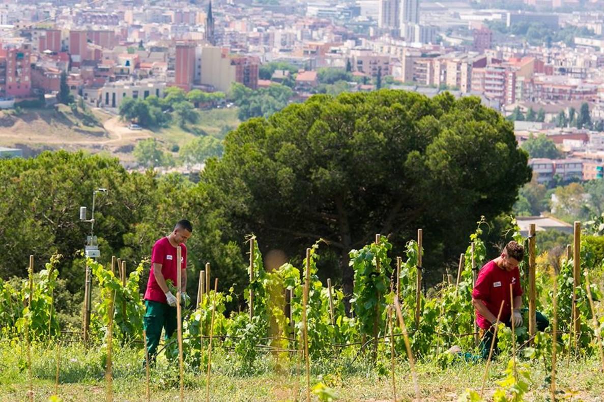 Panorámica de la Vinya d'en Sabater de Santa Coloma de Gramenet.