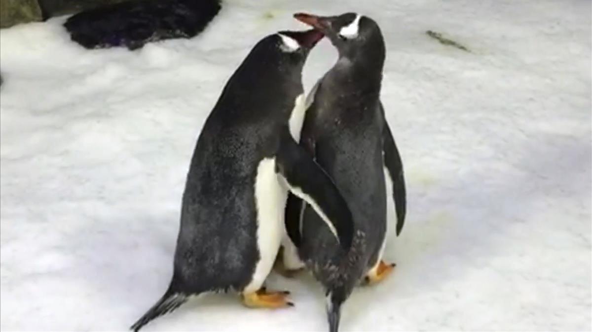 Caso histórico: Una pareja de pingüinos macho se convirtieron en padres