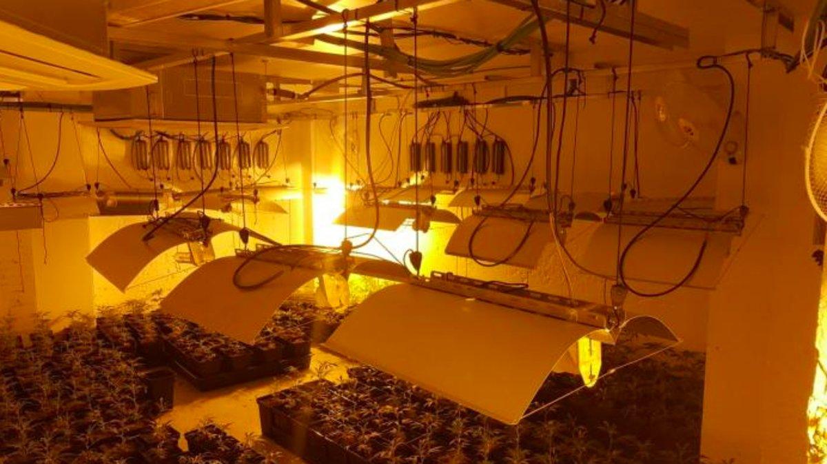 Plantación de marihuana en un local del barrio de les Planes, en LHospitalet