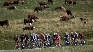 El pelotón del Tour, en la fase inicial de la 18ª etapa.