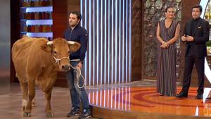 La vaca Patricia, en el plató de Master Chef
