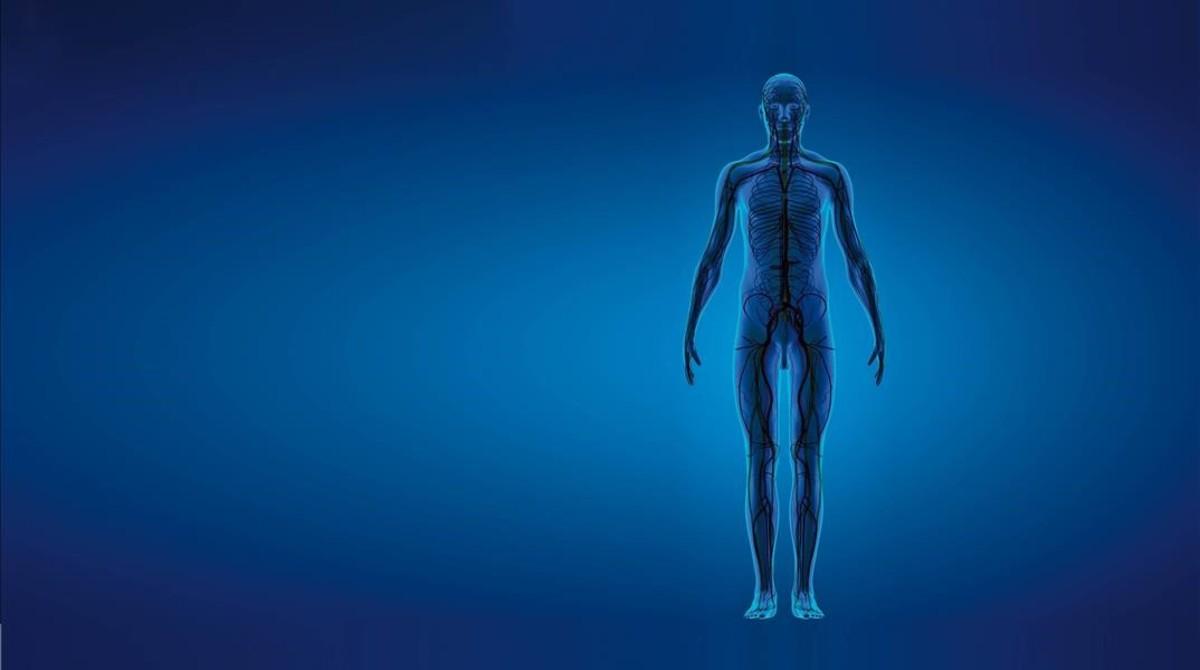 El interior de un cuerpo humano.