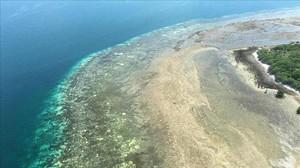 Un arrecife coralino afectado por el emblanquecimientoen el noreste de Australia.