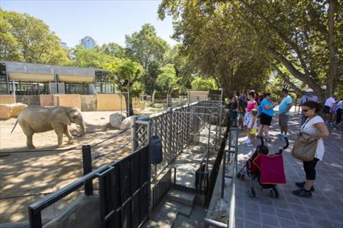 Visitantes del Zoo ante la zona reservada a los elefantes.