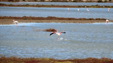 El delta del Ebro 'recupera' dos lagunas de gran valor ecológico