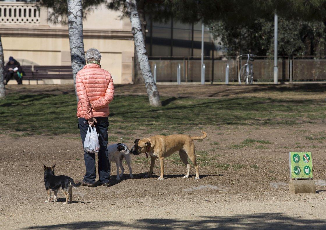 Detingut l'amo de dos gossos perillosos que van ferir set urbans