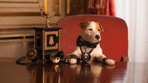Pancho, el Perro de la Lotería, en unanunciode La Primitiva.