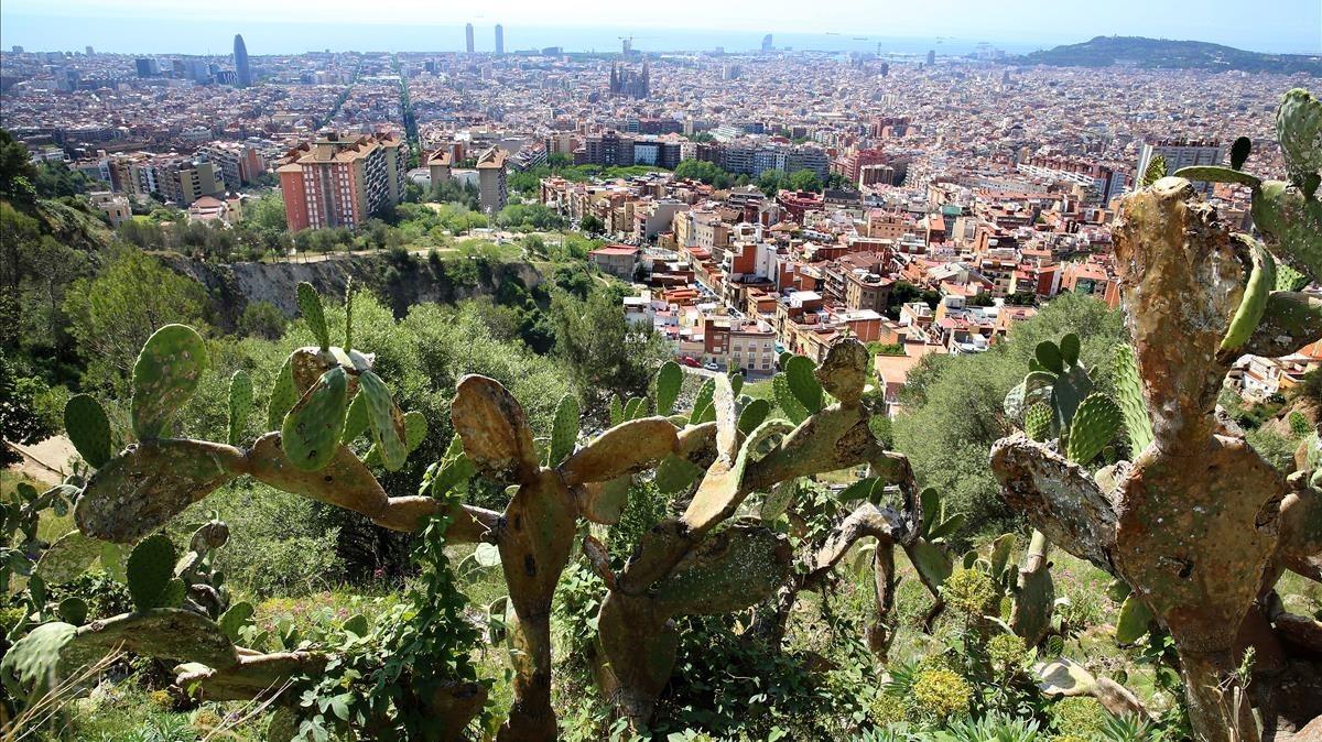 Paraje de la sierra de Collserola, Barcelona.
