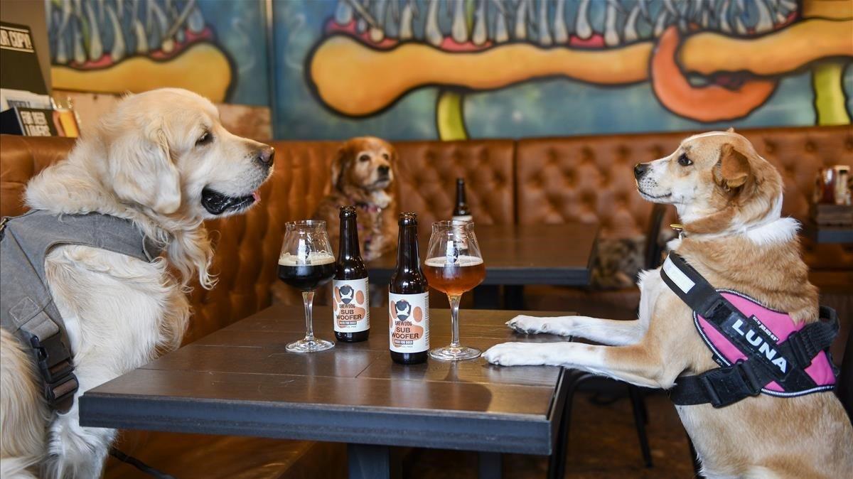 Tres perros posan enBrewDog entre botellines de cerveza para canes. Es postureo perruno. Ellos beben la cerveza en cuenco.