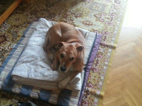 Fotografía del perro de Teresa Romero, Excálibur.