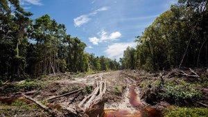 Zona de acceso a una plantación de aceite de palma, en una foto de archivo del 2013