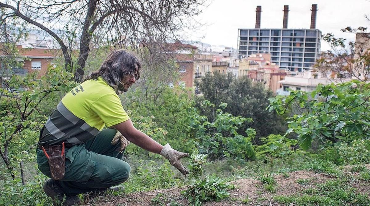 Un jardinerodel Ayuntamiento de Barcelona en el parque del Mirador del Poble Sec.