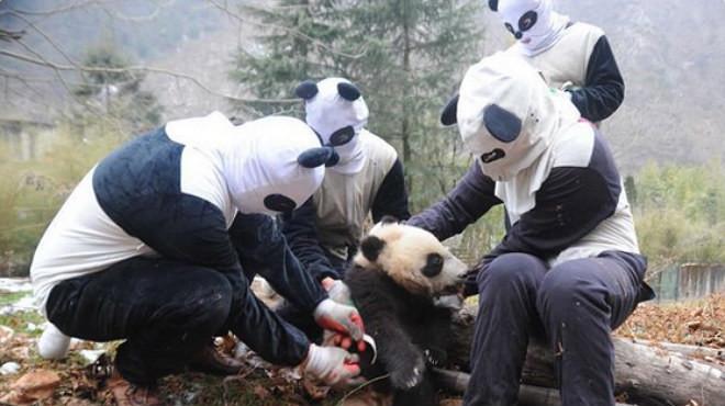 Disfrazados de pandas por una buena causa