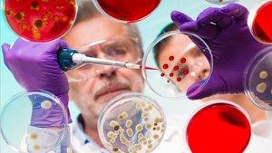 Los expertos apuntan a que en los últimos años habríamos perdido una cantidad asombrosa de diversidad microbiana