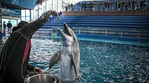 Delfines en el Zoo de Barcelona.