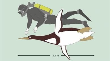 Un pingüino prehistórico de tamaño humano