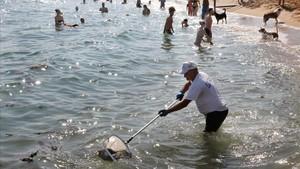 Rates mortes a les platges de Barcelona