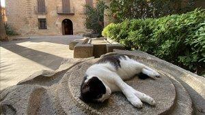 Un gato, estiradoen las instalaciones del Museo de Historia de L'Hospitalet.