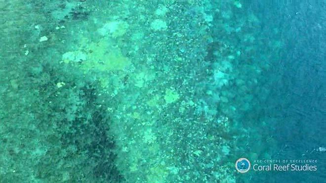 Emblanquiment de corall a Austràlia