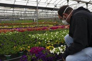Els productors de plantes donen l'any per perdut