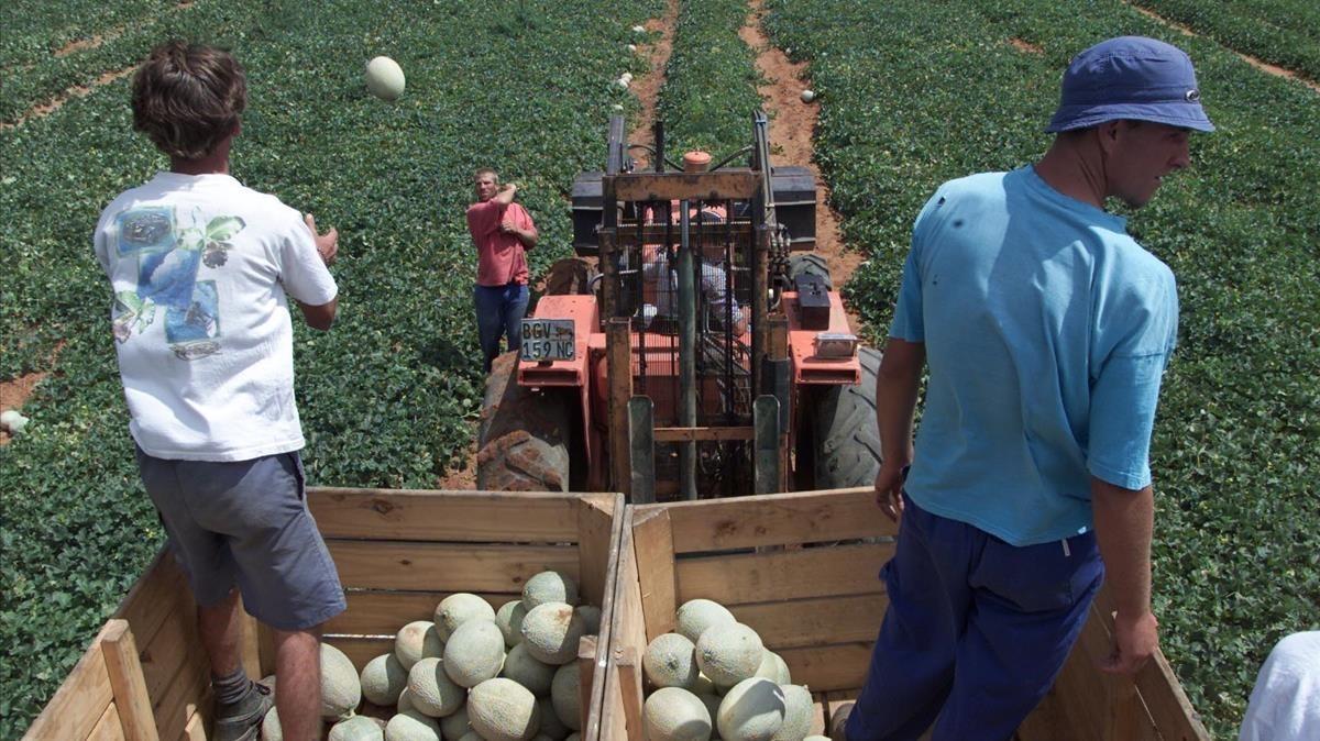 Un granjeros afrikaners en su explotación agrícola enOrania, Sudáfrica.