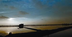 Arrozales inundados y a punto para la siembra en el delta del Ebro, dentro del área calificada como reserva de la biosfera.