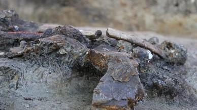 Los humanos ya cazaban rinocerontes en Filipinas hace más de 700.000 años
