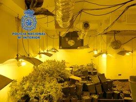 Imagen de una de las plantaciones intervenidas por la Policía Nacional en Rubí y Terrassa