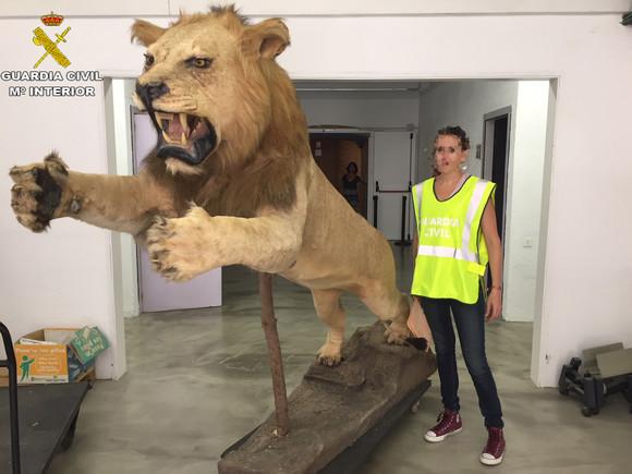 El león disecado.