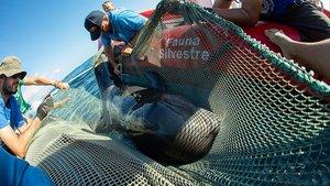 Alerta per la mort de cetacis atropellats per barcos