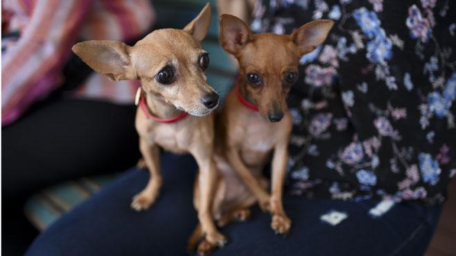 Barcelona abre expediente sancionador a dos web por venta ilegal de animales.