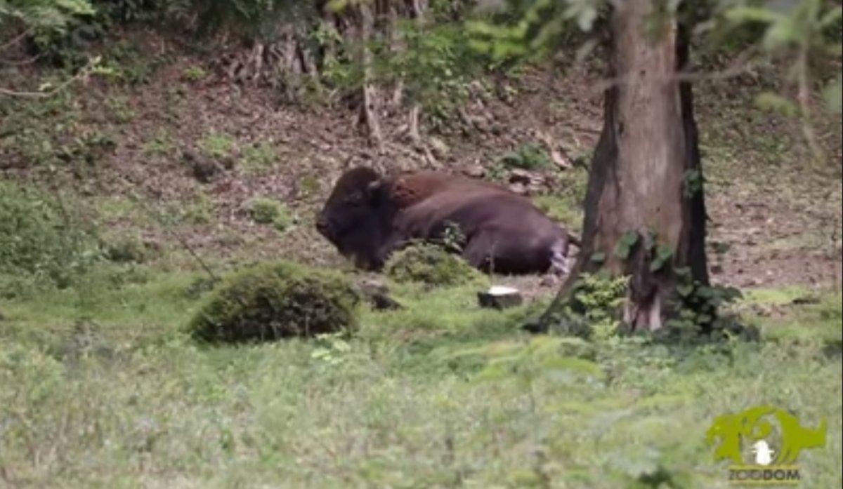 Es el primero en 8 años. Este suceso, se logra luego de una ardua labor por parte de nuestros técnicos del zoológico.