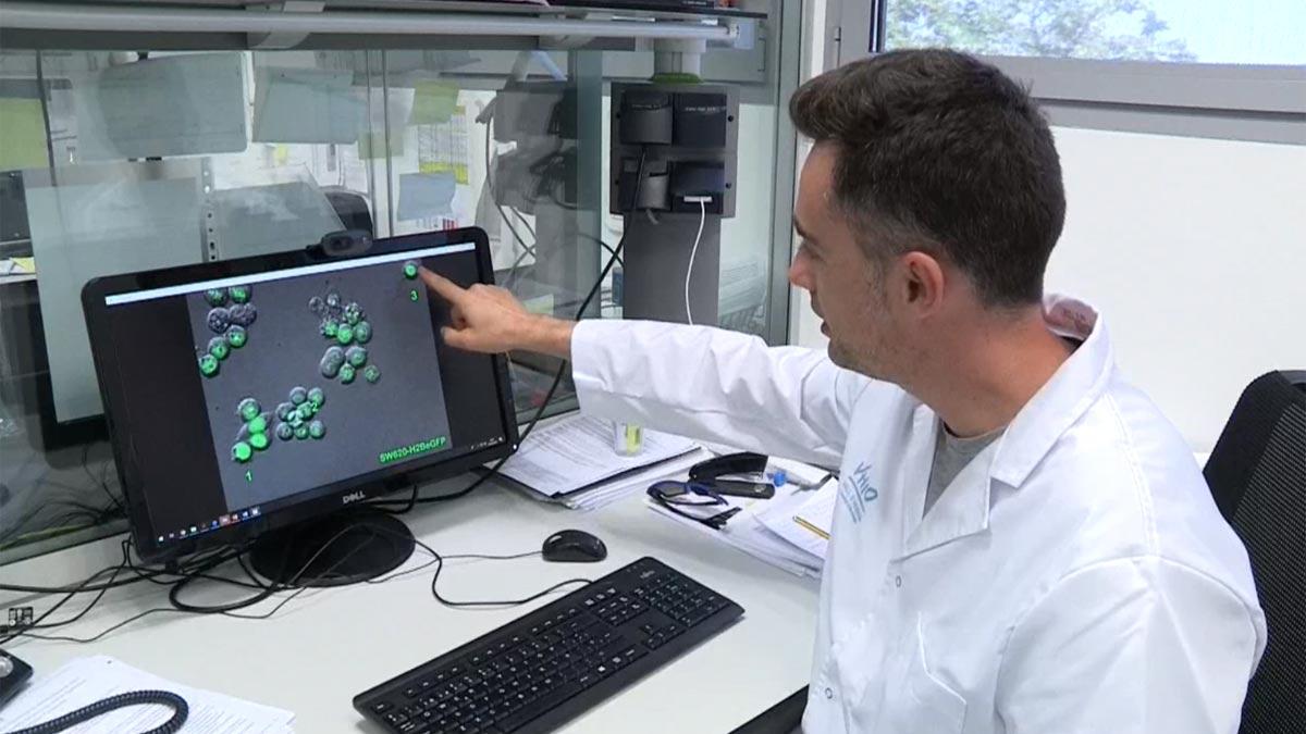 Investigadores de Vall dHebron descubren el punto débil de las células tumorales causantes de recaídas del cáncer.