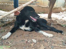 Ping Pong, el perro que salvó la vida de un bebé que estaba enterrado en el campo