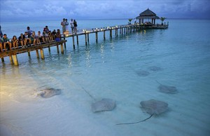 Turistas en Maldivas observando unas rayas.