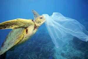 PLASTICOS EN EL MAR La presencia de plássticos en los oceános es una de las grandes amenazas que afectan a la salud de estos ecosistemas