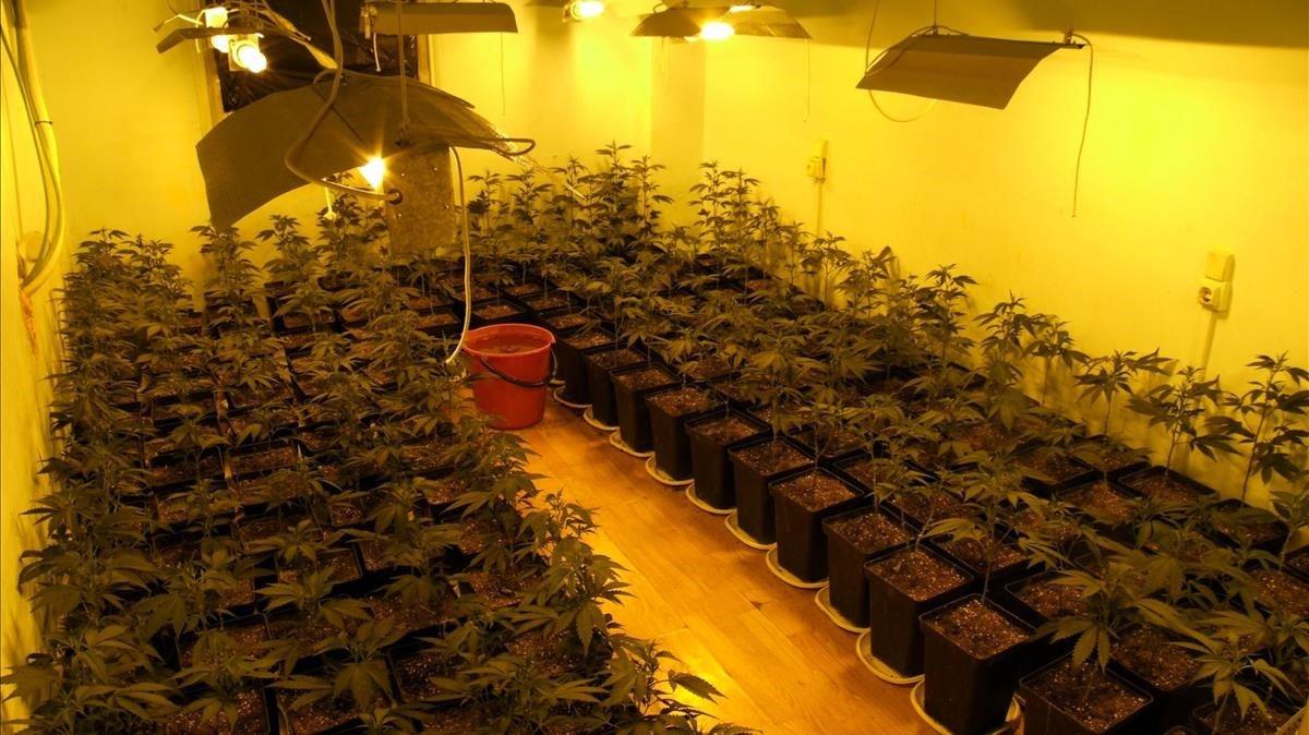 Cinc detinguts amb gairebé 100 quilos de marihuana i drogues sintètiques que 'cuinaven' en un laboratori de Madrid