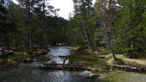 Debemos cuidar la naturaleza, que nos ofrece su protección en estos tiempos inciertos