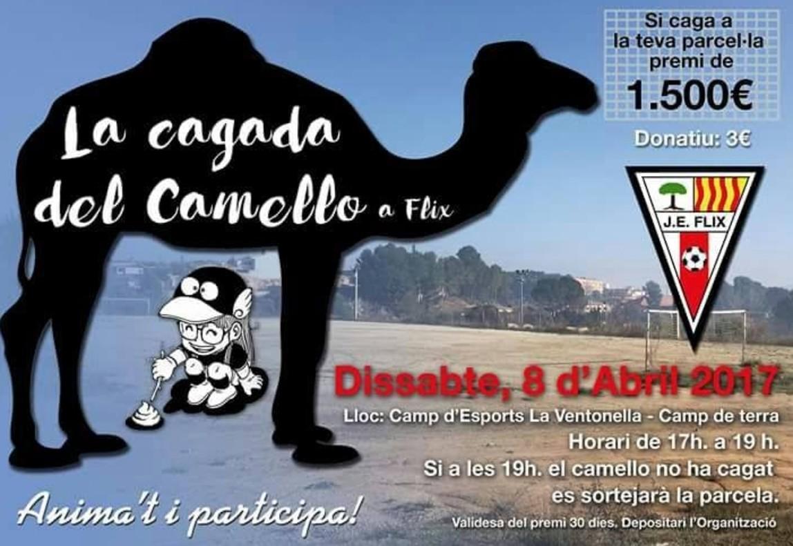 Con un campo de fútbol y un camello, en Flix se montan un bingo: 1.500 € si defeca en tu casilla